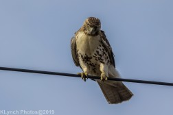 Hawk_38