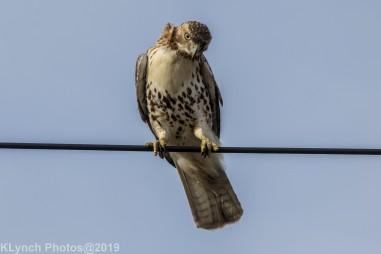 Hawk_42