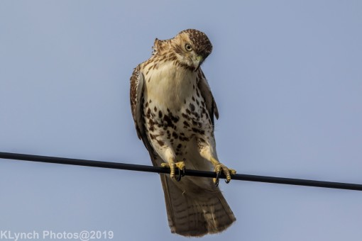 Hawk_44