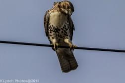 Hawk_45