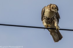 Hawk_47