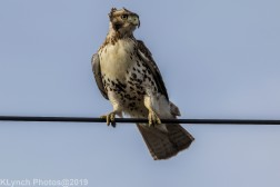 Hawk_57