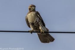 Hawk_58