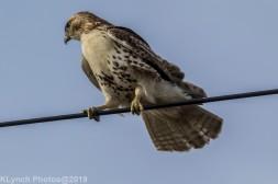 Hawk_59