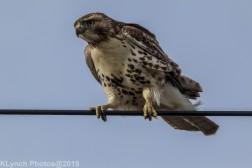 Hawk_62