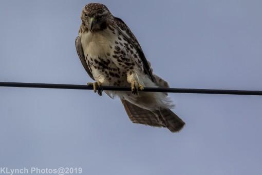Hawk_66