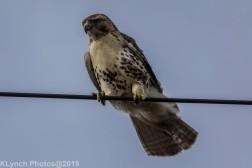 Hawk_67