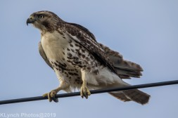 Hawk_69