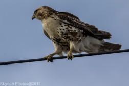 Hawk_71
