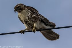 Hawk_72