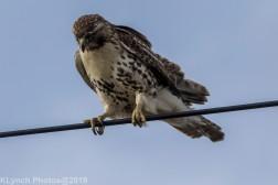 Hawk_73