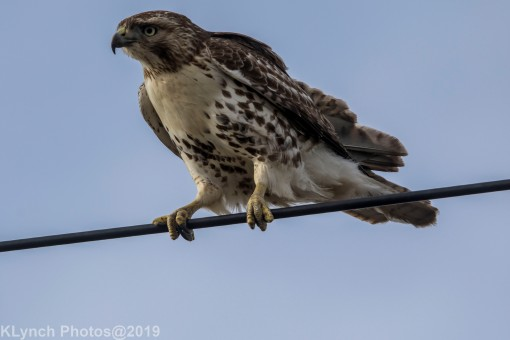 Hawk_74