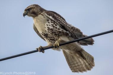 Hawk_76
