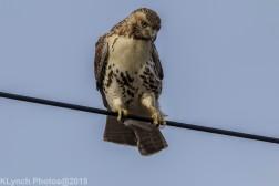 Hawk_78