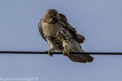 Hawk_81