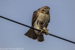 Hawk_82