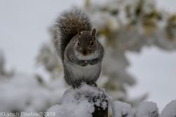 Squirrel_13