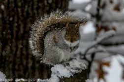 Squirrel_3