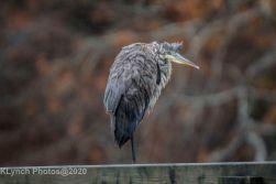 Heron_1
