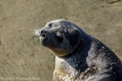 Seal_100