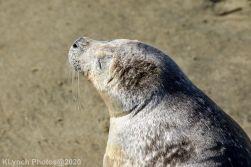 Seal_101