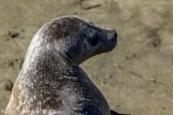 Seal_102