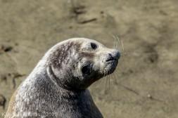 Seal_103