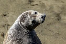 Seal_104