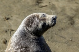 Seal_105