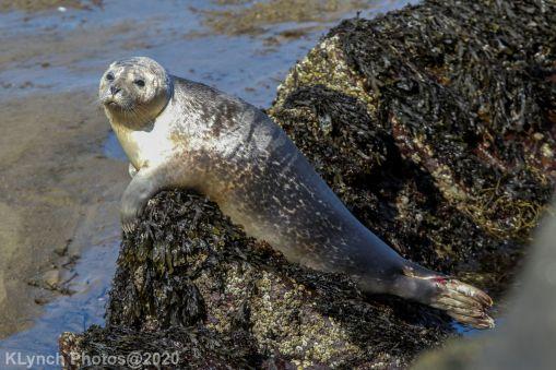 Seal_107
