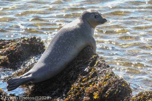 Seal_11