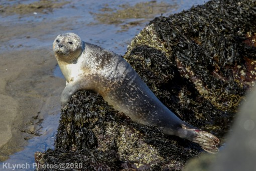 Seal_110