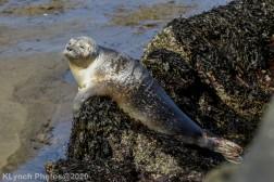 Seal_111