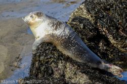 Seal_112