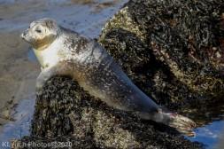 Seal_113