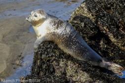 Seal_114