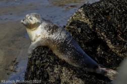 Seal_115