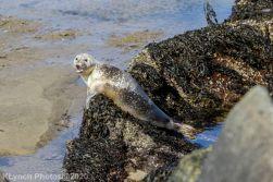 Seal_116