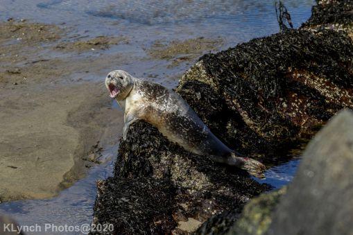 Seal_118