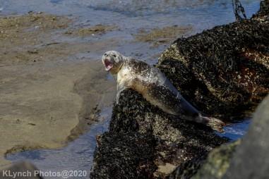 Seal_119