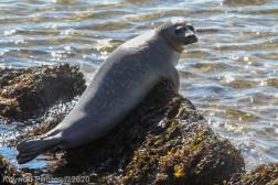 Seal_12