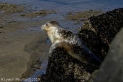 Seal_122