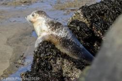 Seal_123