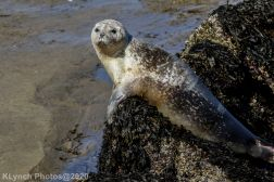 Seal_124