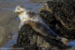 Seal_126