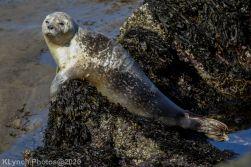 Seal_127