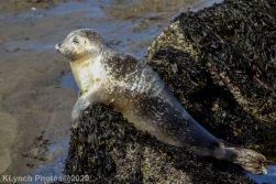 Seal_128