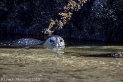 Seal_133