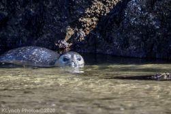 Seal_134