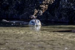Seal_135